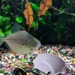 Ultra Low Noise Aquarium Fish Tank Air Bubble Compressor Oxygen Pump (B)