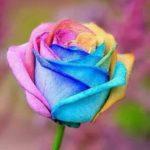 100pcs Rainbow Rose Flower Seeds Home Garden Yard Bonsai Plants Seedlings