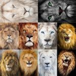 5D DIY Full Drill Diamond Painting Lion Embroidery Mosaic Craft Kit (hg412)
