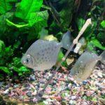 Aquarium Gravel Cleaner Fish Tank Siphon Water Change Cleaning Filter Hose
