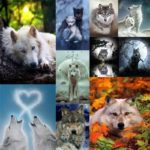 5D DIY Full Drill Diamond Painting Cross Stitch Embroidery Mosaic (Wolf10)