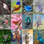 5D DIY Full Drill Diamond Painting Bird Embroidery Mosaic Craft Kits (w602)