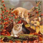 5D DIY Full Drill Diamond Painting Cat Embroidery Mosaic Craft Kits Decor