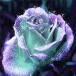 5D DIY Full Drill Diamond Painting Glitter Flower Cross Stitch Embroidery