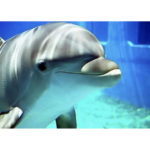 5D DIY Full Drill Diamond Painting Swimming Dolphin Cross Stitch Embroidery