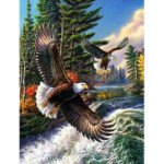 Painting By Numbers Kit DIY Eagle Hand Painted Canvas Oil Art Picture Craft
