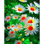 5D DIY Full Drill Diamond Painting Color Flower Cross Stitch Embroidery Kit