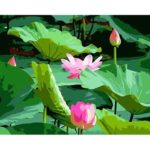 Painting By Numbers Kit DIY Lotus Hand Painted Canvas Oil Art Picture Craft