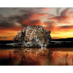 Painting By Numbers Kit DIY Lonely Leopard Canvas Oil Art Picture Craft