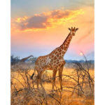 Painting By Numbers Kit DIY Giraffe Hand Painted Canvas Oil Art Picture