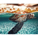 Painting By Numbers Kit DIY Sea Turtle Hand Painted Canvas Oil Art Picture