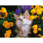 DIY Digital Painting By Numbers Cat Flower Canvas Picture Modern Wall Art