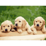 DIY Digital Painting By Numbers Dog Frameless Canvas Picture Home Decor