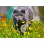 5D Diamond Painting Full Drill Walking Cat DIY Cross Stitch Animal Decor