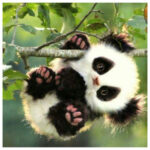 5D DIY Diamond Painting Lovely Panda Cross Stitch Embroidery (W0383)