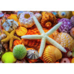 5D DIY Full Diamond Painting Pentagram Shell Embroidery Art Picture Mosaic