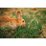 Paper Jigsaw Puzzle 1000pcs Rabbit on Grassland Adult Kid Assemble Game Toy