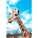 Paper Jigsaw Puzzle 1000pcs Giraffe Blue Sky Assemble Adult Kids Toys Gift