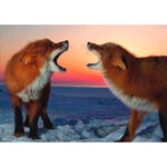 5D DIY Diamond Painting Two Foxes Barks Full Drill Animal Picture Embroider