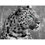 5D DIY Full Drill Diamond Painting Stare Leopard Cross Stitch Embroidery