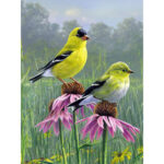 5D DIY Full Drill Diamond Painting Looking Birds Cross Stitch Embroidery