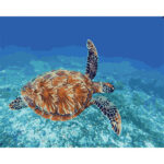 Sea Turtles DIY Oil Painting By Numbers Acrylic Paints Art Kit (ZC3053)
