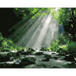 DIY Digital Oil Painting By Numbers Kits Sun Woods Color Drawing Picture