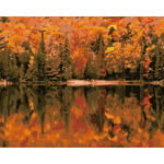 DIY Digital Oil Painting By Numbers Kits Autumn Woods Drawing Picture Art
