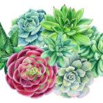 5D DIY Full Round Drill Diamond Painting Succulent Plants Cross Stitch Kit