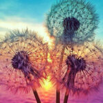 Three Dandelion Canvas Print Wall Poster Painting Picture Modern Home Decor