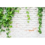 Green Plants Brick Texture Photography Background Cloth Backdrop (0.9×1.5m)
