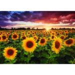 5D DIY Diamond Painting Sunflower Full Round Drill Embroidery Cross Stitch