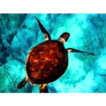Sea Turtles DIY Digital Oil Painting By Number Kit Canvas Paints Wall Decor