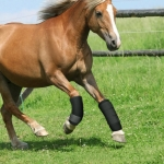 A Pair High Elastic OK Cloth Soft Shock-Absorbing Anti-Collision Horse Leg Protective Cover Protection Straps Horse Protective Gear